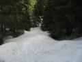 Winter forest, freerdide