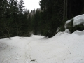 Skiing in the forest, Perelik, Snowcamp